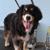 Downtown Akron Doggies LLC