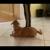 Tripp's Dog Training St Petersburg