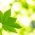 Environmental Turf & Tree LLC