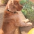 Bowdon Animal Clinic Inc