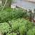 Gilmore's Greenhouse