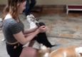 A Pet Villa - Santa Clara, CA
