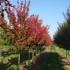 Baldwin Tree Farm