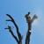 Vergara Tree Service