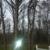 Bazetta Tree Inc