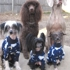 Rochester Canine Academy