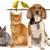 Nanette's Pampered Pets