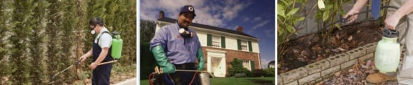 Mr. Critter Gitter Pest Control Services, Euclid Ohio