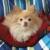 TLC Pet Care - Muncie Pet Sitter