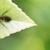 Savings Pest Control