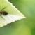 Positive Pest Control Co