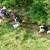 Spring Valley Farm Dog Care