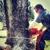 Tidwell's Tree Service