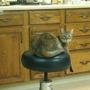 Nob Hill Cat Clinic & Hospital
