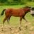Premier Dog and Horse Training