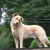 Animal Rescue League of Nh