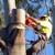 Nosak Tree Service