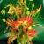 Richard Salome Flowers, Inc.