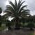 Treaure Coast Turf & Trees Inc
