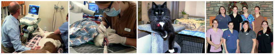 Timpanogos Animal Hospital Image Collage