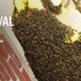Zenith Environmental Pest Control