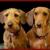 Belpar Pet Care Centre