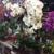 Lolitas Flower Shop