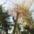 Liberty Arbor Landscaping & Tree Service