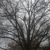 Tree Notch Tree Service LLC
