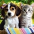 pets-R-us-supplies
