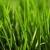 Fresh Cut Lawn Service