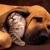 Animal House Veterinary Services PLLC