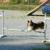 Dog Playland