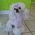 Pupazzo Dog Grooming & Pet supplies Xpress