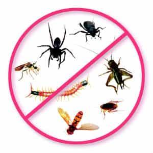No Bugs!