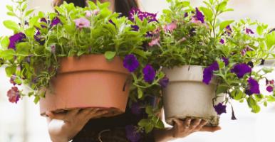 florist plant delivery orlando