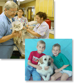 Veterinarian Garden Grove