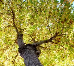 emergency tree