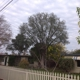 San Jose Tree Service