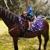 K&M Pony Parties