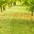 Panzner's Tree Service Inc