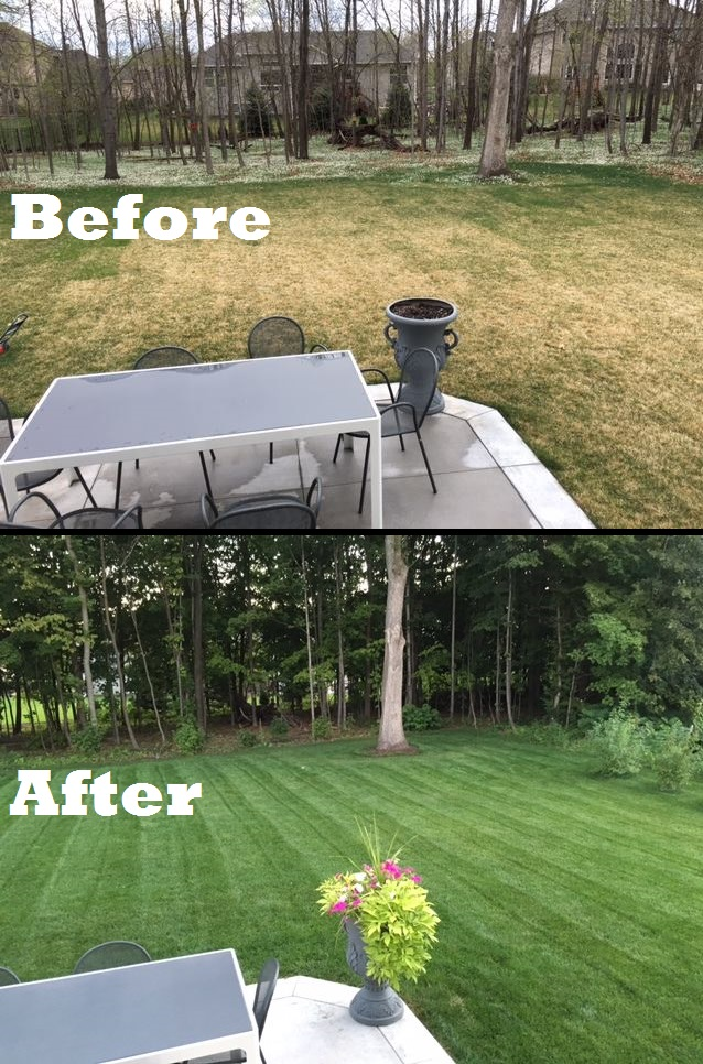 BeforeAfterLawn