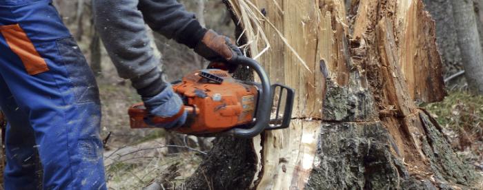 tree removal 1-700x276.jpg