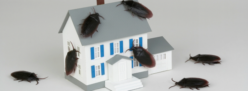 bug house