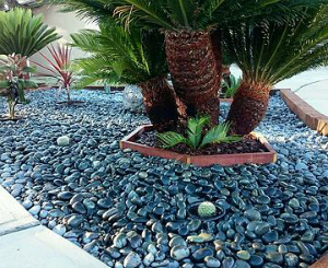 Residential Landscaping in Los Angles