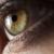 Fogg Maxwell Lanier & Remington EyeCare Inc