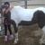 Healing Hands Horsemanship, Inc. - CLOSED