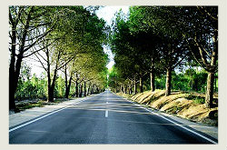 paving contractors, fullerton california, asphalt repair, concete paving 8