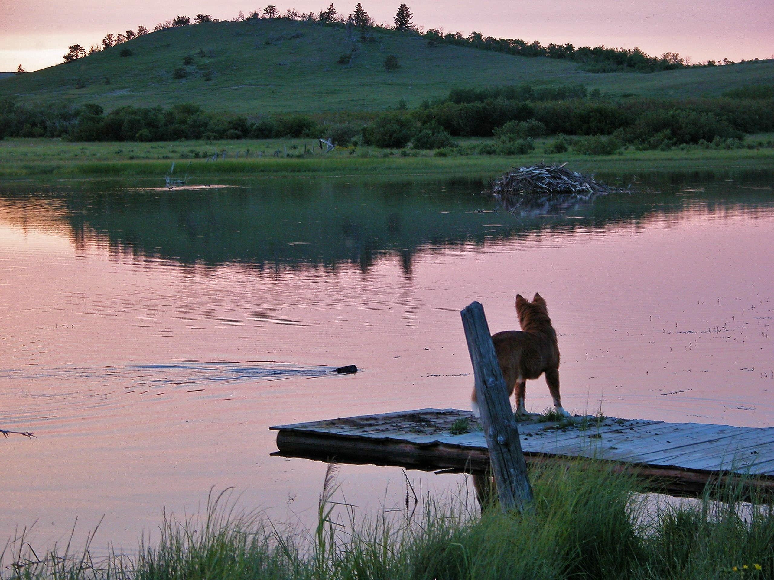 Aspenwood Resort, Browning MT