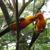 Zaksee Florida Bird Sanctuary